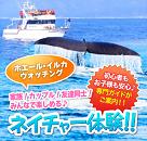 野生動物に出会う旅☆ホエールウオッチングツアー!のイメージ