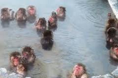 湯の川温泉セレクト
