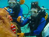 クマノミ城体験ダイビング