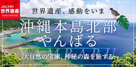 沖縄本島北部やんばる
