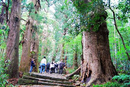 《世界遺産》熊野古道大門坂